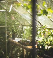 La historia del invernadero para cultivos