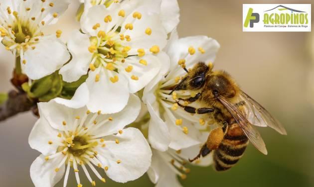 Importancia de las abejas en los cultivos