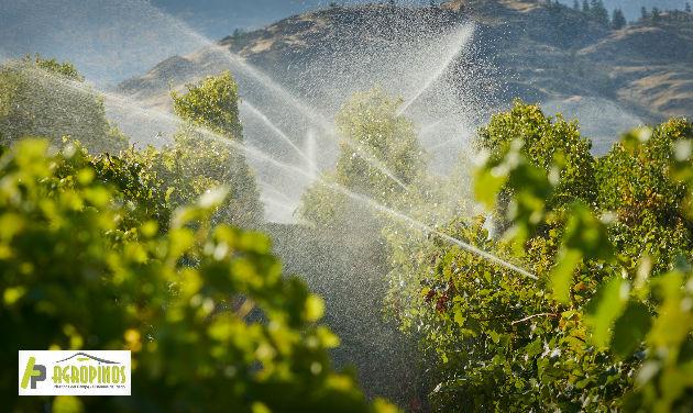 La calidad del agua utilizada para los cultivos debe cumplir con ciertas características de calidad para garantizar cosechas saludables.