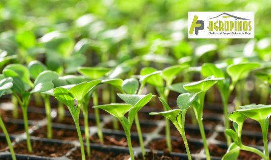 Las bandejas de germinación le permiten mantener el control de la cantidad de plantas que geminan.