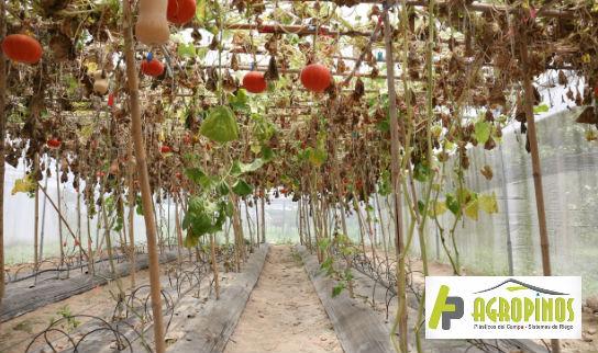 Los sistemas de riego por intervalo rocían los cultivos con agua rica en nutrientes directamente en las raíces.