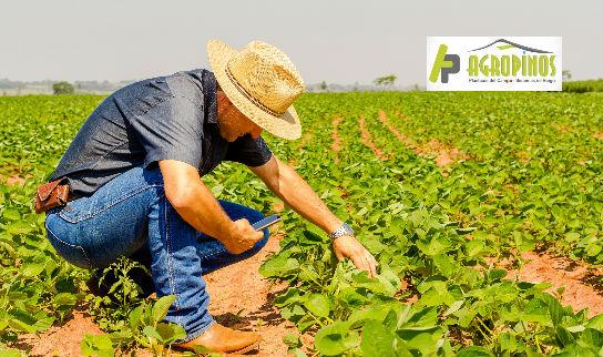 La pandemia ha traído cambios interesantes para muchos nichos dentro del sector del agro.