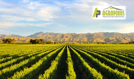 Los cultivos de frutas en La Sabana de Bogotá se pueden optimizar adecuando los ambientes con polisombras o geomembranas.