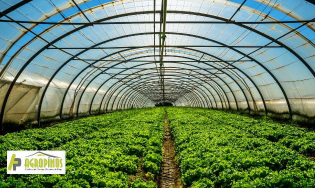 Es importante mantener la humedad entre 45% y el 60% cuando modifique la temperatura del invernadero