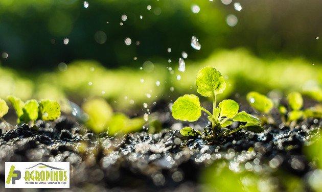 El riego inteligente de cultivos ayuda a optimizar los procesos de producción garantizando mejor calidad en los productos.