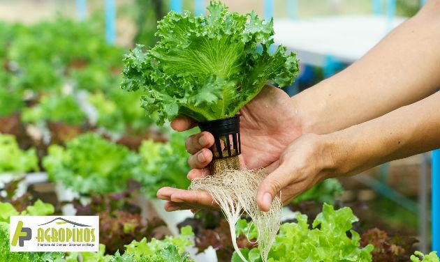 Los cultivos hidropónicos son una alternativa sostenible y mucho más eficiente a los métodos de cultivo tradicional.