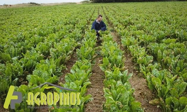 Agropinos lo aconseja para que tenga un buen cultivo