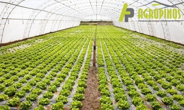 Conozca los beneficios de las geomembranas y las polisombras con Agropinos