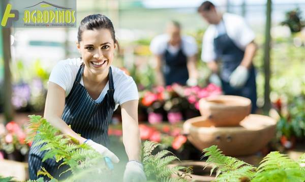 Los mejores cultivos en casa se logran con Agropinos