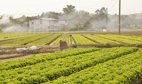 Elementos ideales para tu cultivo