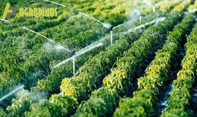 Optimice el sistema de riego de su invernadero con Agropinos