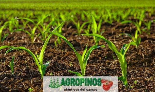 Cuide sus cultivos con estos productos | Agropinos