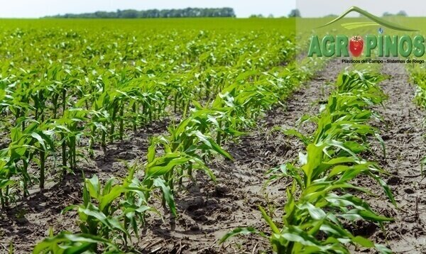 Cuide su cultivo en clima frio con estos productos | Agropinos