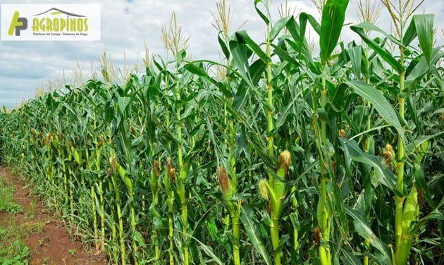 Proteja sus cultivos con los productos de Agropinos
