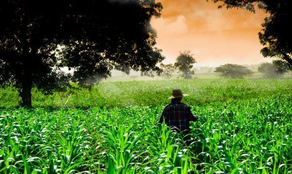 El cultivo de secano cuenta con ventajas únicas | Agropinos