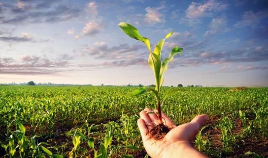 Nuevas tendencias en cultivos