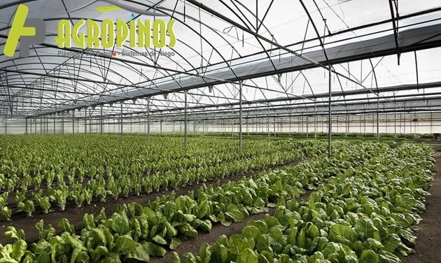 Conozca 3 tipos de invernaderos para sus cultivos