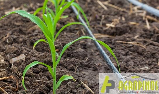 Conozca los tipos de sistemas de riego que hay y su utilidad   Agropinos