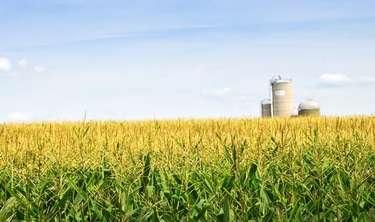 Conozca las soluciones integrales para el sector agrícola con Agropinos