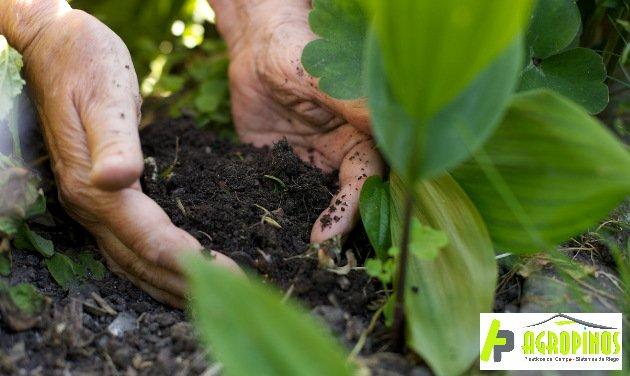 Mejore la calidad de sus suelos con Agropinos