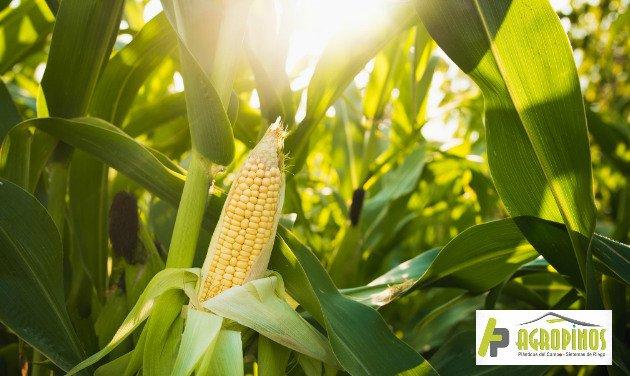 Logre cultivos productivos con insumos de agro de AgroPinos