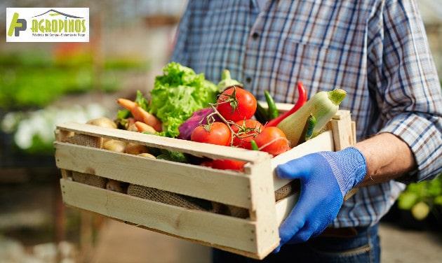 Mejore la calidad de sus cultivos con Agropinos
