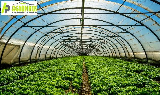 Desinfecte los suelos de su cultivo con Agropinos
