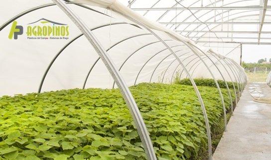 Los mejores plásticos para la producción los encuentras en Agropinos
