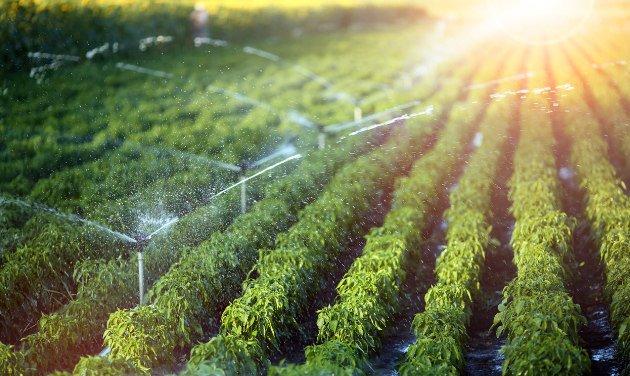 Tenga óptimos sistemas de riego con Agropinos
