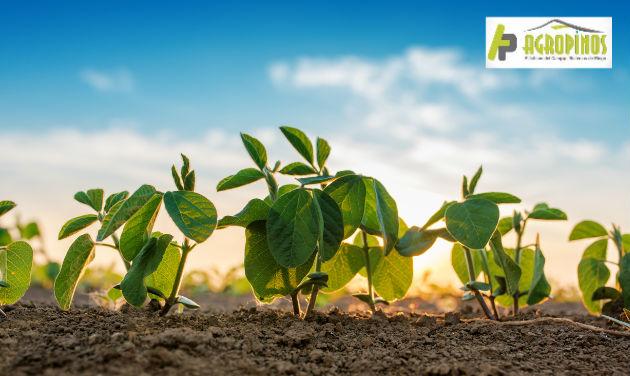 Identificar la falta de nutrientes en los cultivos será indispensable para garantizar productividad.