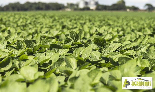 Los micronutrientes contribuyen al proceso de combustión y producción de los cultivos.