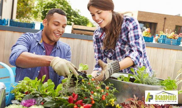 Las hierbas medicinales cumplen múltiples funciones en términos de salud y bienestar general, por eso es ideal tenerlas en el hogar.