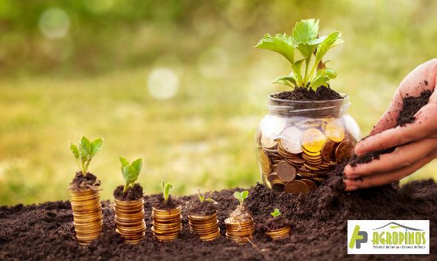 Planee presupuesto del ciclo productivo de su cultivo.