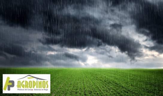 Agua de lluvia para las plantas