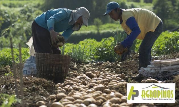 trabajo de cultivo en Boyacá