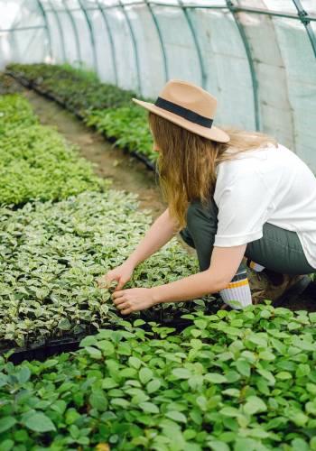 cultivos de hierbas y hortalizas