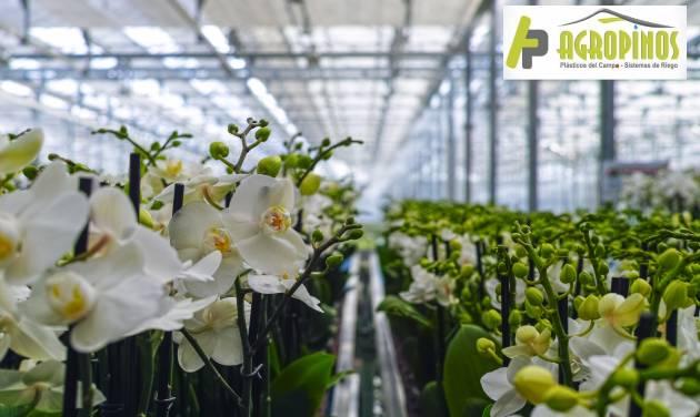 cultivos para invernadero
