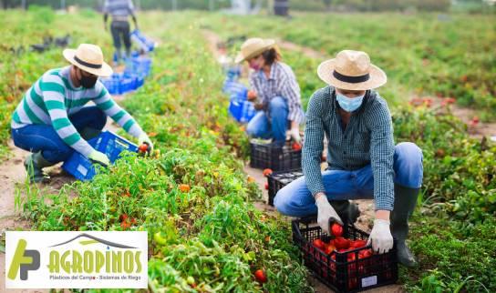 personas trabajando en el campo