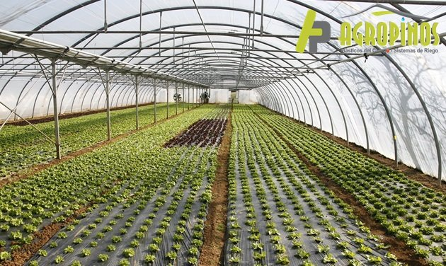 Los mejores plásticos para invernadero con Agropinos