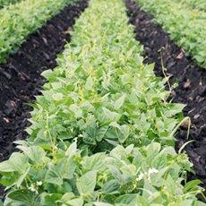 Recomendaciones para cultivos