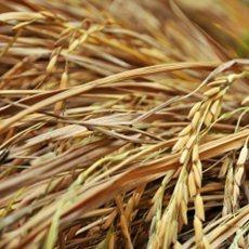 Semillas-para-su-invernadero