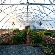 Aprenda a controlar las condiciones de sus cultivos