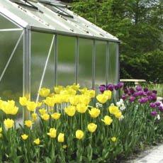 Consejos de jardinería para cuidar sus plantas