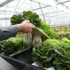 Beneficios de los invernaderos