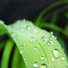 Consejos para aprovechar el agua en su invernadero