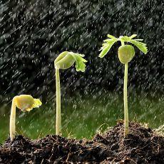 Beneficios de la lluvia para sus cultivos