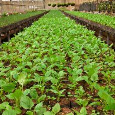 productos lucrativos para el agro