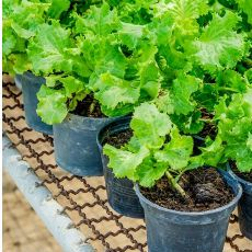 Los fertilizantes nutren los cultivos