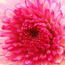 El cultivo de flores da una excelente decoracion a los hogares