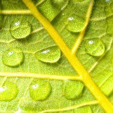 Elementos que debe tener en su invernadero